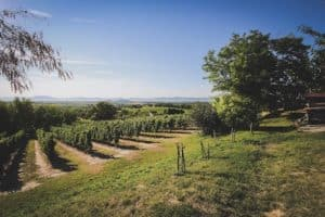 Balaton Weinregion